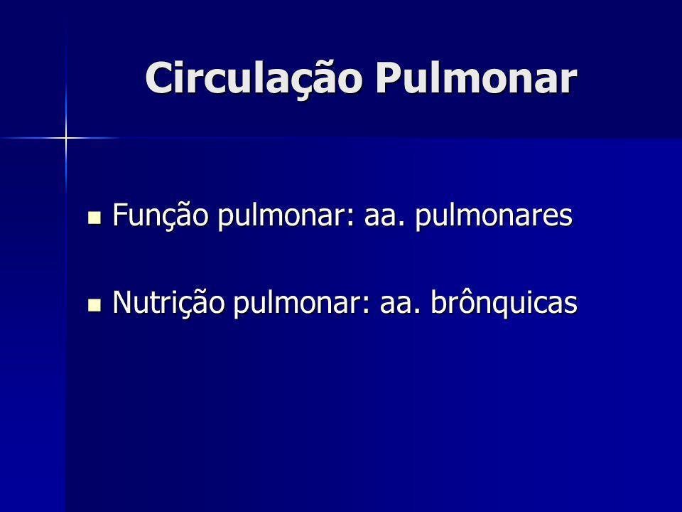 Circulação Pulmonar Função pulmonar: aa. pulmonares