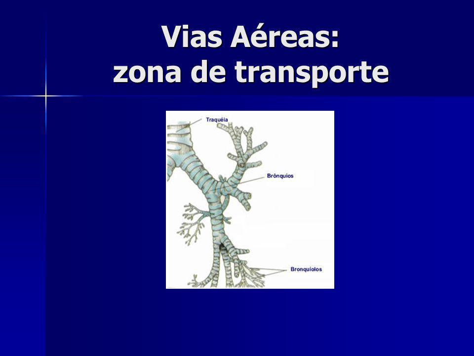 Vias Aéreas: zona de transporte
