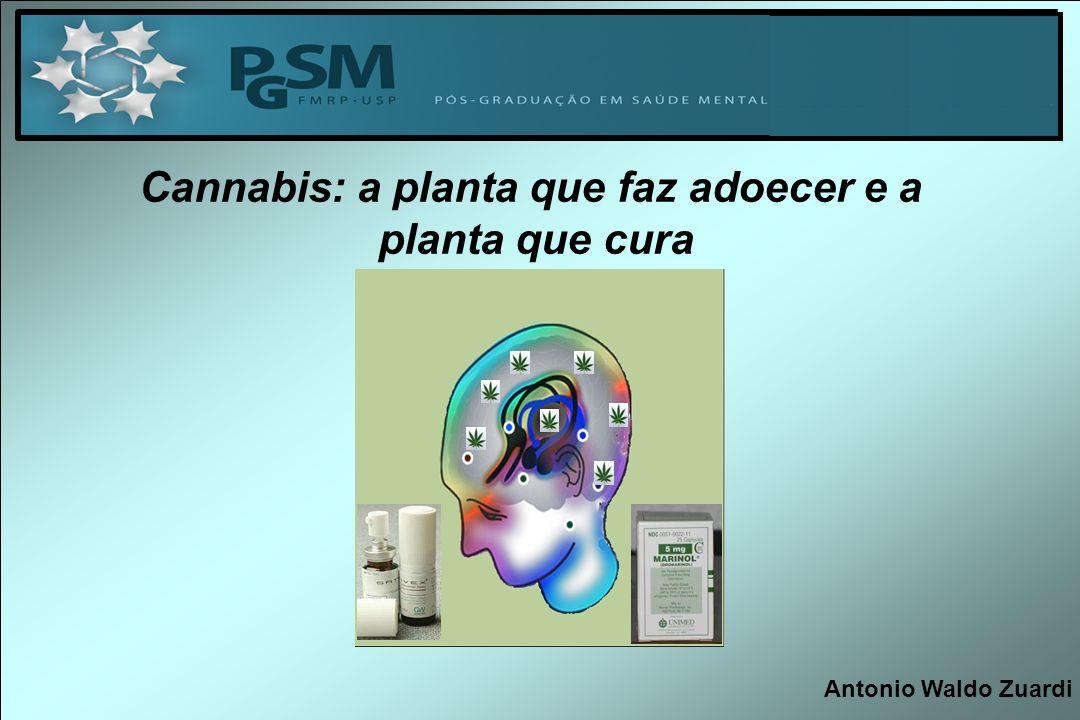 Cannabis: a planta que faz adoecer e a