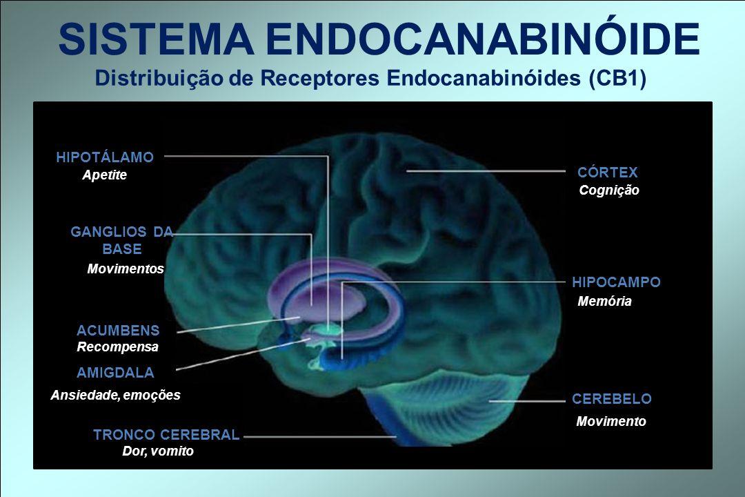 Distribuição de Receptores Endocanabinóides (CB1)