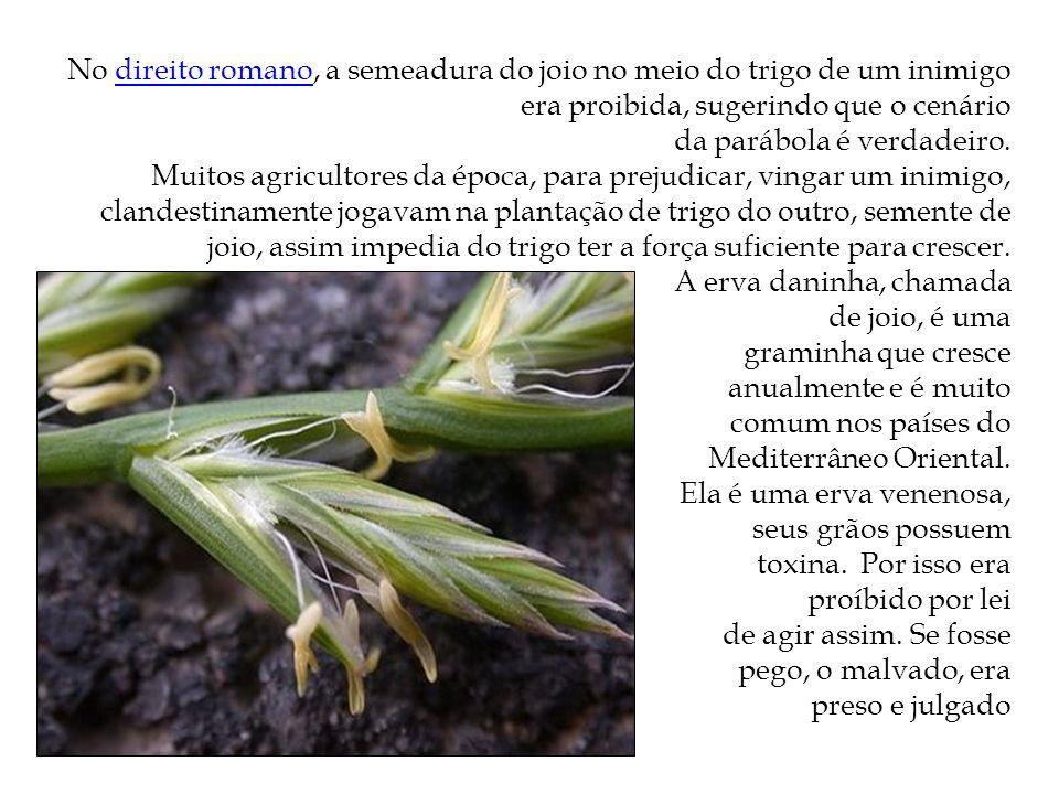 No direito romano, a semeadura do joio no meio do trigo de um inimigo era proibida, sugerindo que o cenário