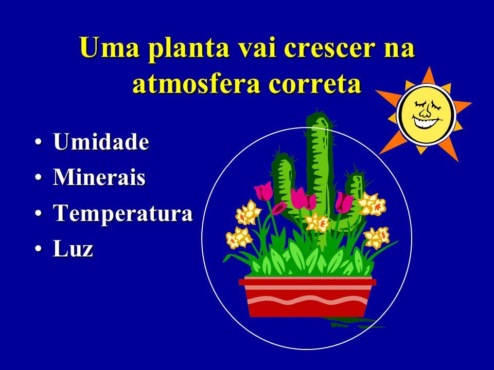 Uma planta vai crescer na atmosfera correta