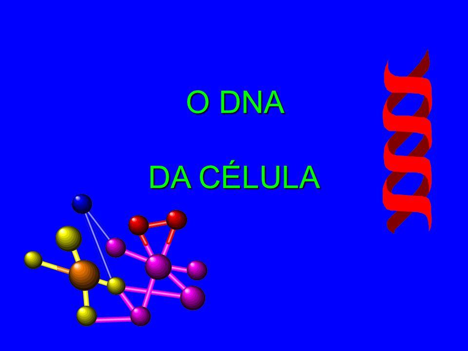 O DNA DA CÉLULA