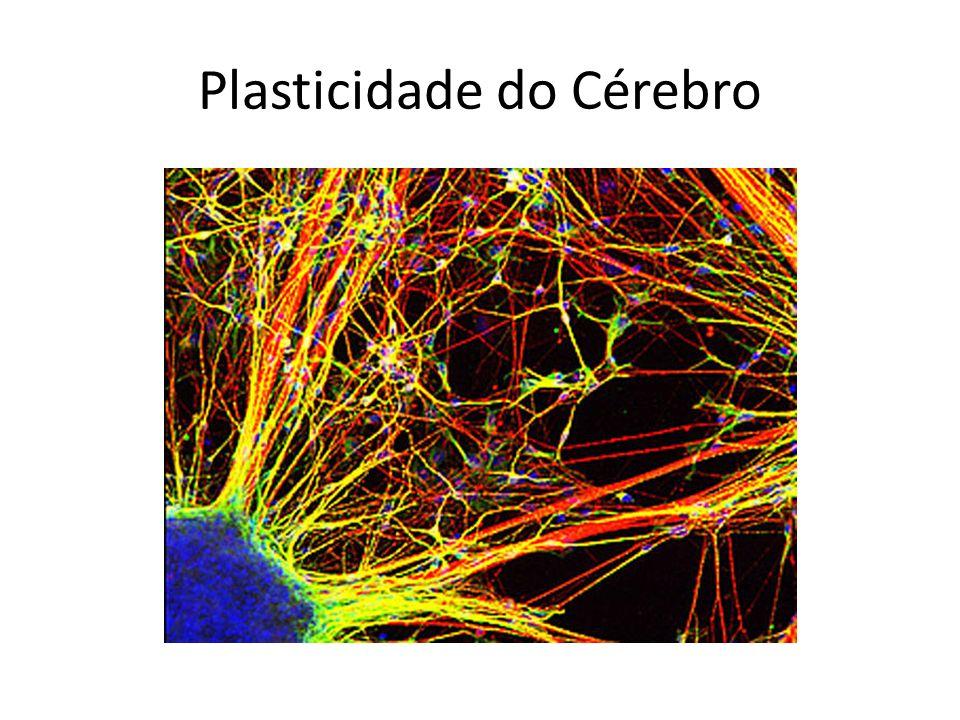 Plasticidade do Cérebro