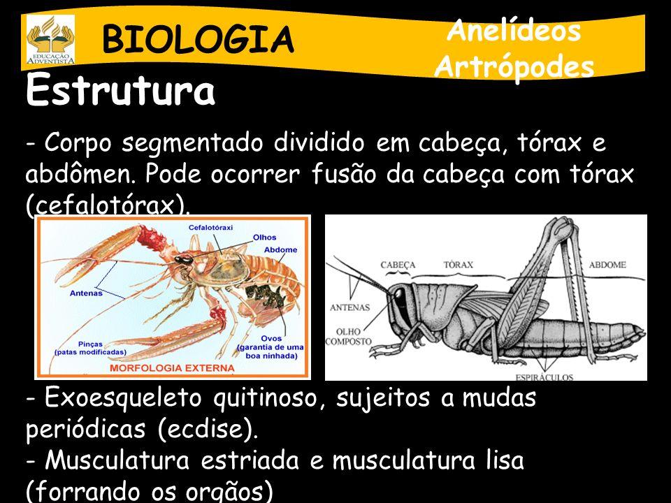 Estrutura BIOLOGIA Anelídeos Artrópodes