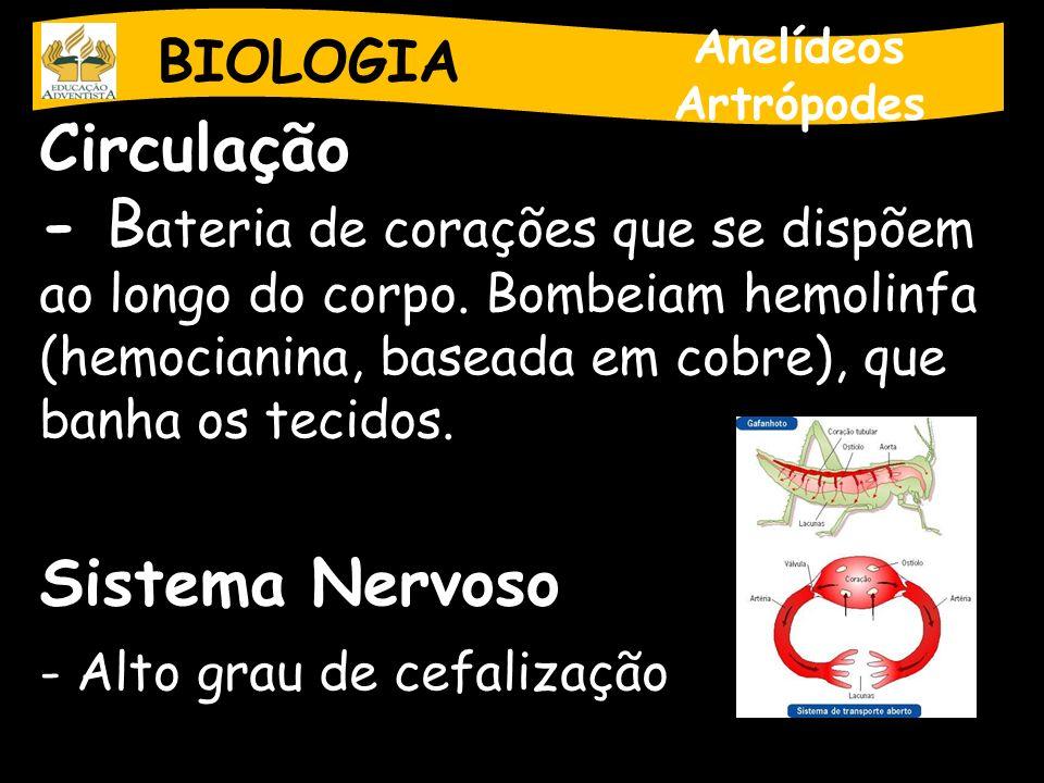 BIOLOGIA Anelídeos. Artrópodes. Circulação.