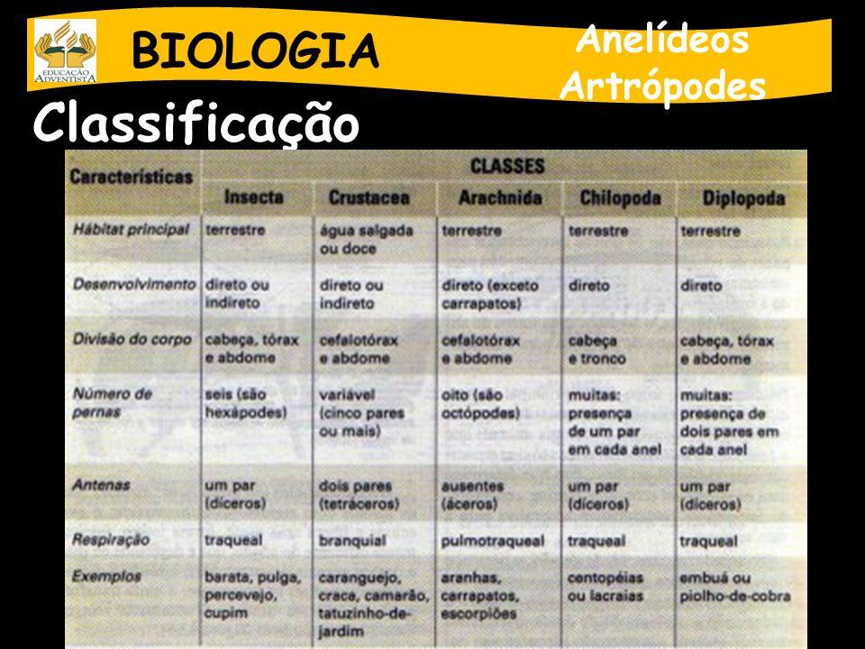 BIOLOGIA Anelídeos Artrópodes Classificação