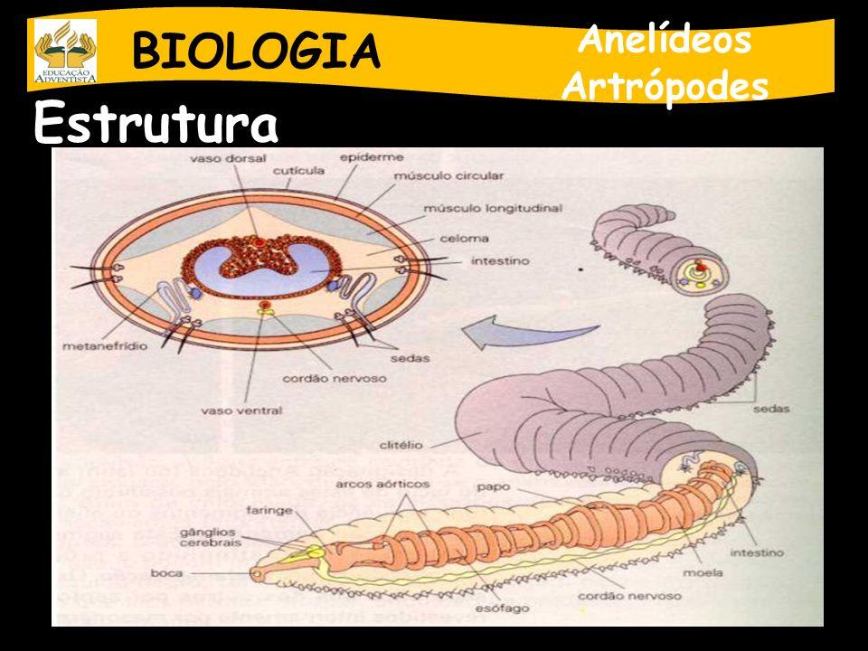 BIOLOGIA Anelídeos Artrópodes Estrutura