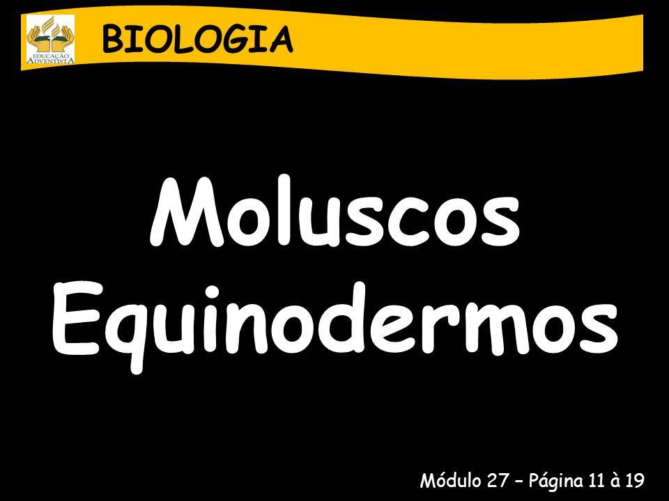 Moluscos Equinodermos