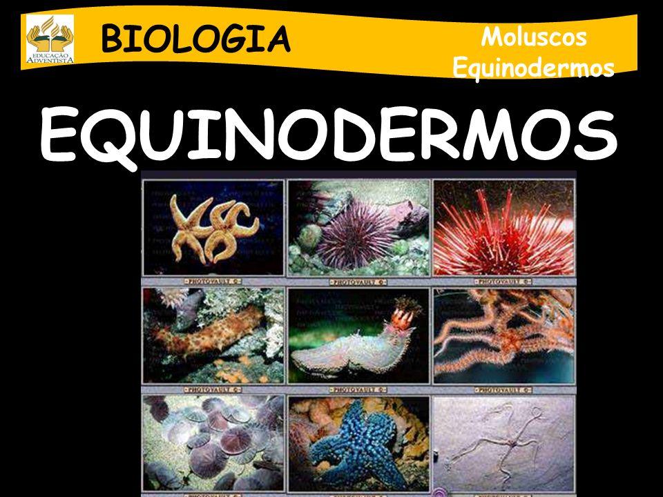 BIOLOGIA Moluscos Equinodermos EQUINODERMOS