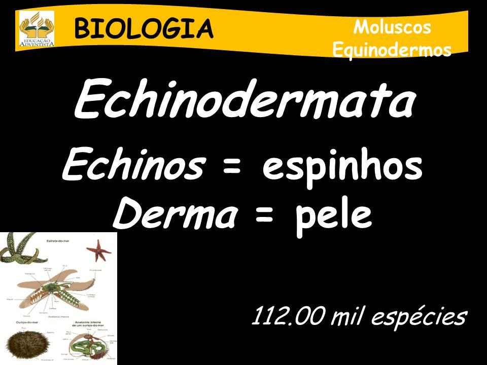 Echinodermata Echinos = espinhos Derma = pele BIOLOGIA