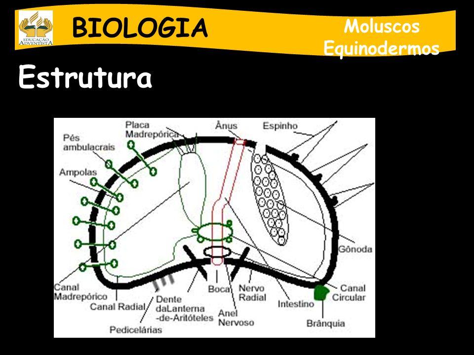 BIOLOGIA Moluscos Equinodermos Estrutura