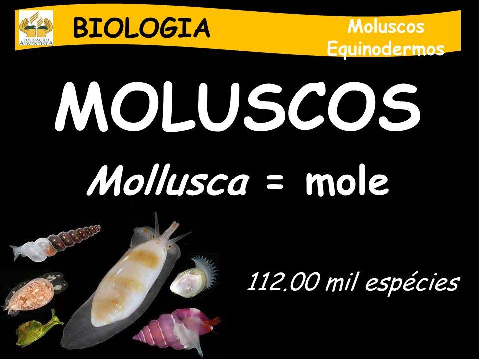 MOLUSCOS Mollusca = mole BIOLOGIA 112.00 mil espécies Moluscos