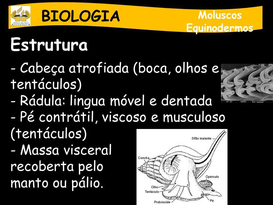 Estrutura BIOLOGIA Cabeça atrofiada (boca, olhos e tentáculos)