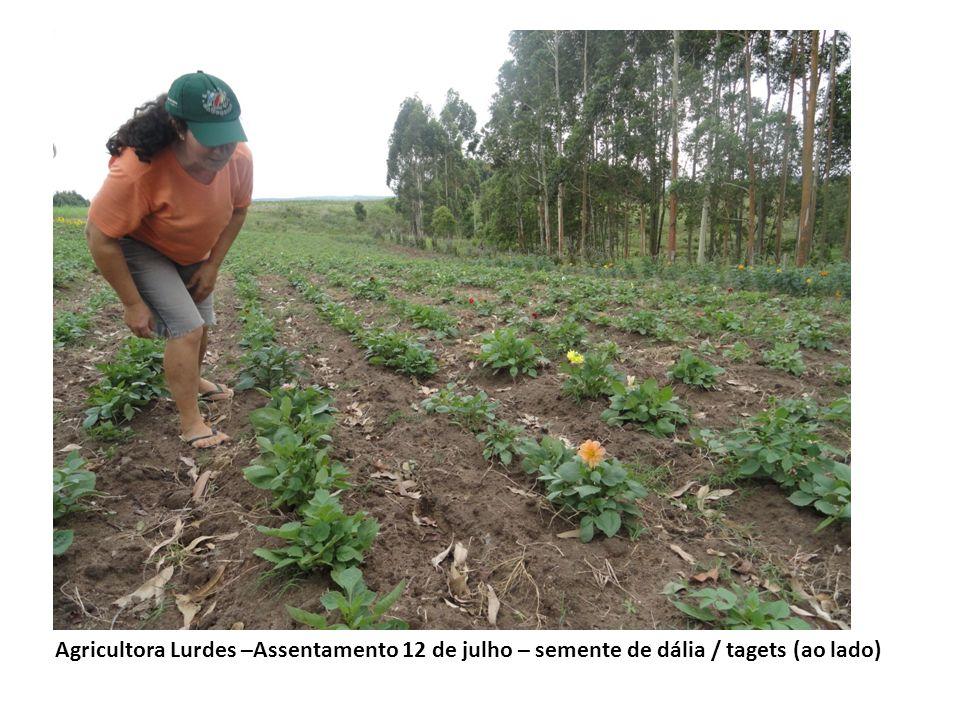 Agricultora Lurdes –Assentamento 12 de julho – semente de dália / tagets (ao lado)