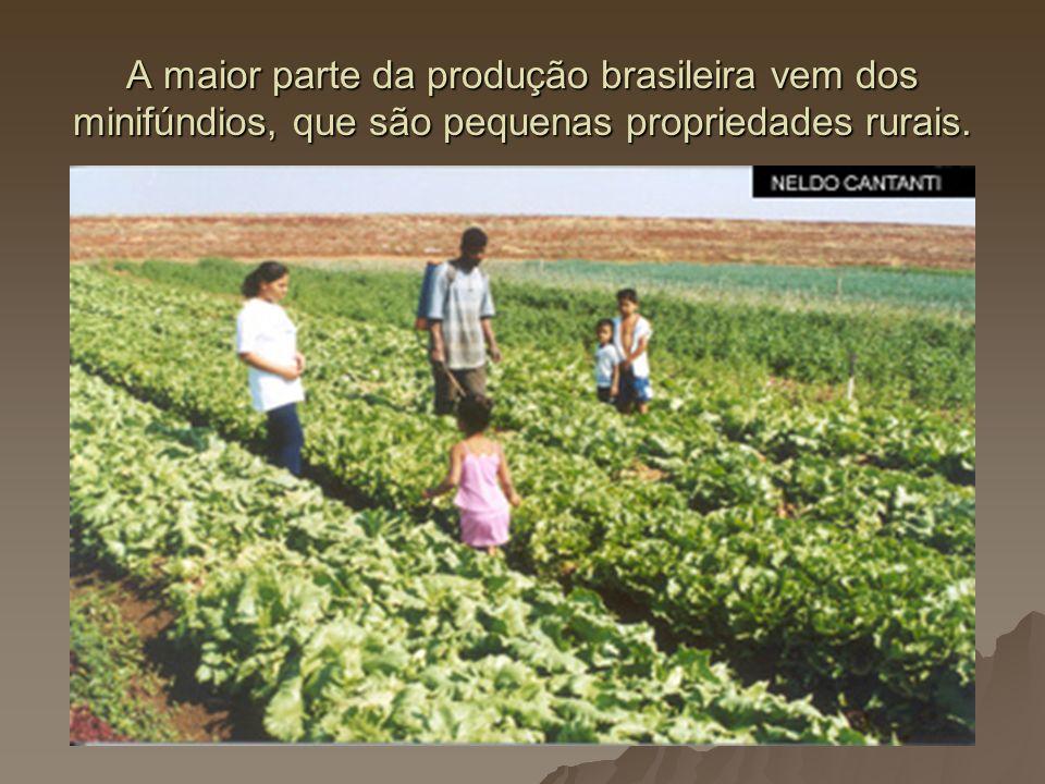 A maior parte da produção brasileira vem dos minifúndios, que são pequenas propriedades rurais.