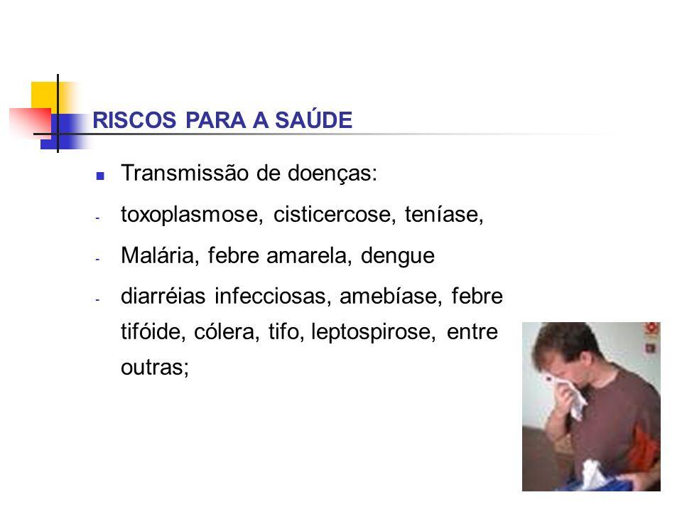 RISCOS PARA A SAÚDE Transmissão de doenças: toxoplasmose, cisticercose, teníase, Malária, febre amarela, dengue.