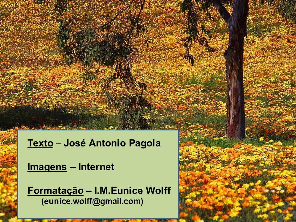 Texto – José Antonio Pagola Imagens – Internet