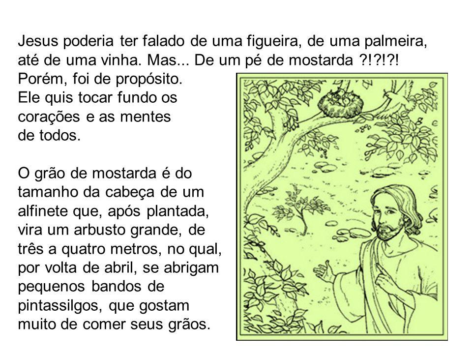 Jesus poderia ter falado de uma figueira, de uma palmeira, até de uma vinha. Mas... De um pé de mostarda ! ! !