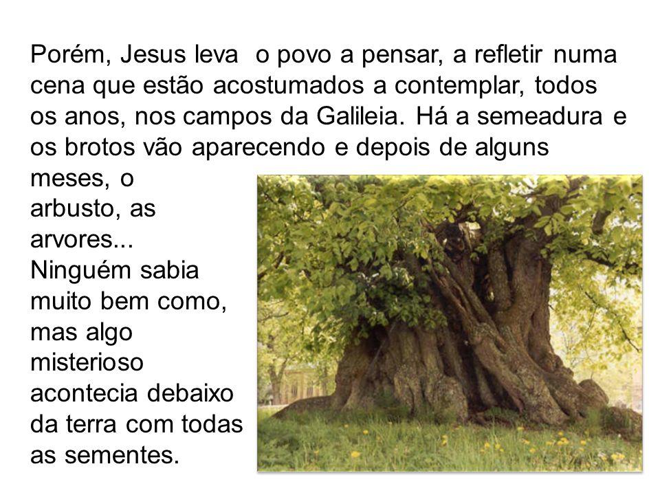 Porém, Jesus leva o povo a pensar, a refletir numa cena que estão acostumados a contemplar, todos os anos, nos campos da Galileia. Há a semeadura e os brotos vão aparecendo e depois de alguns meses, o
