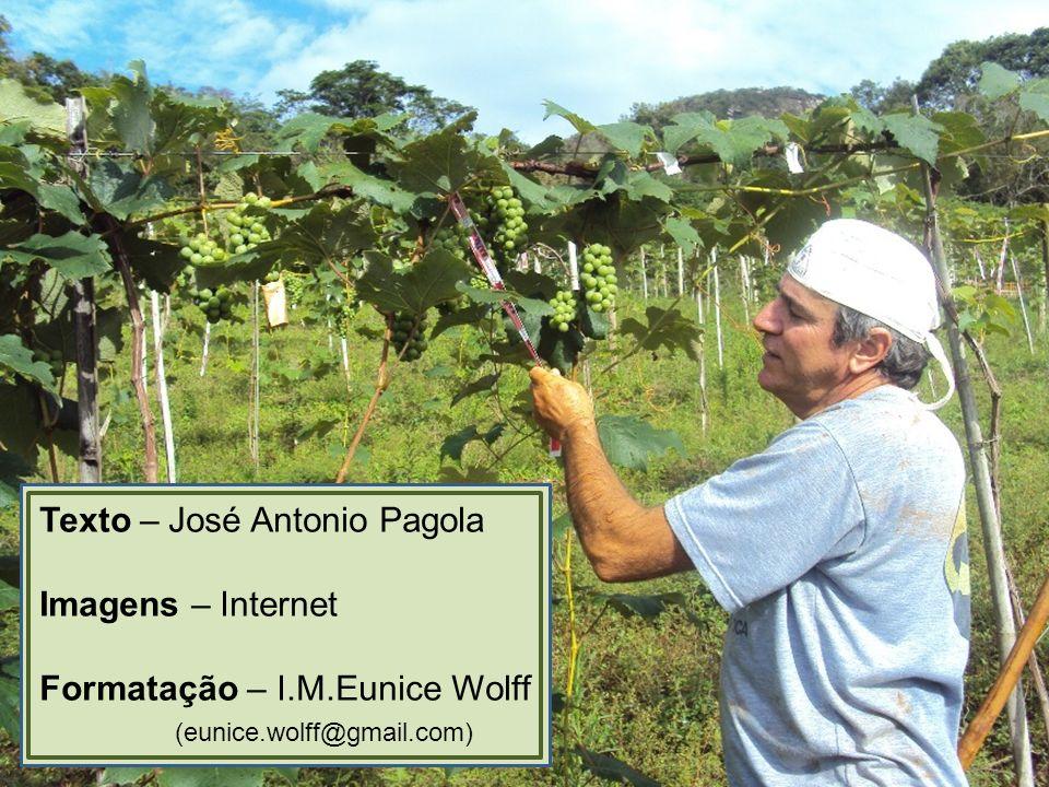 Texto – José Antonio Pagola