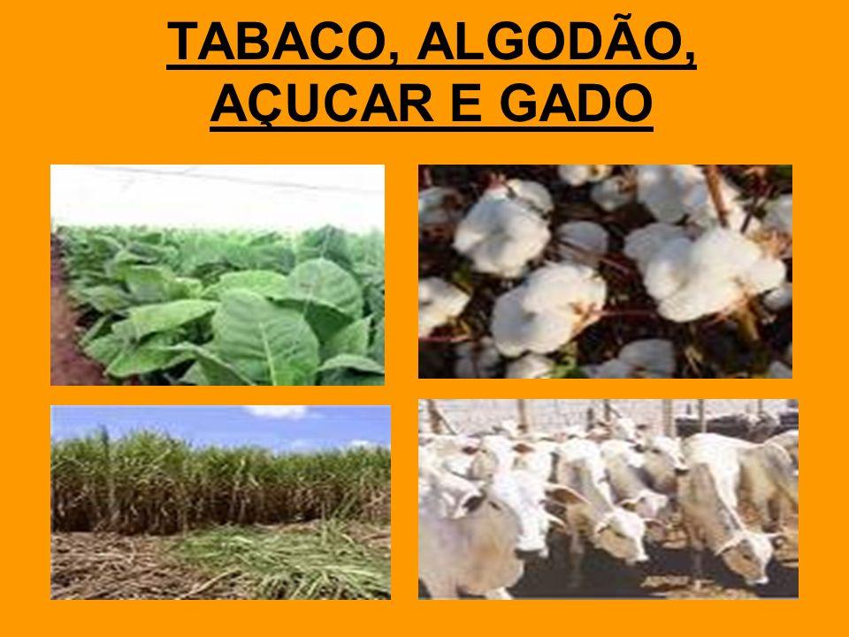 TABACO, ALGODÃO, AÇUCAR E GADO