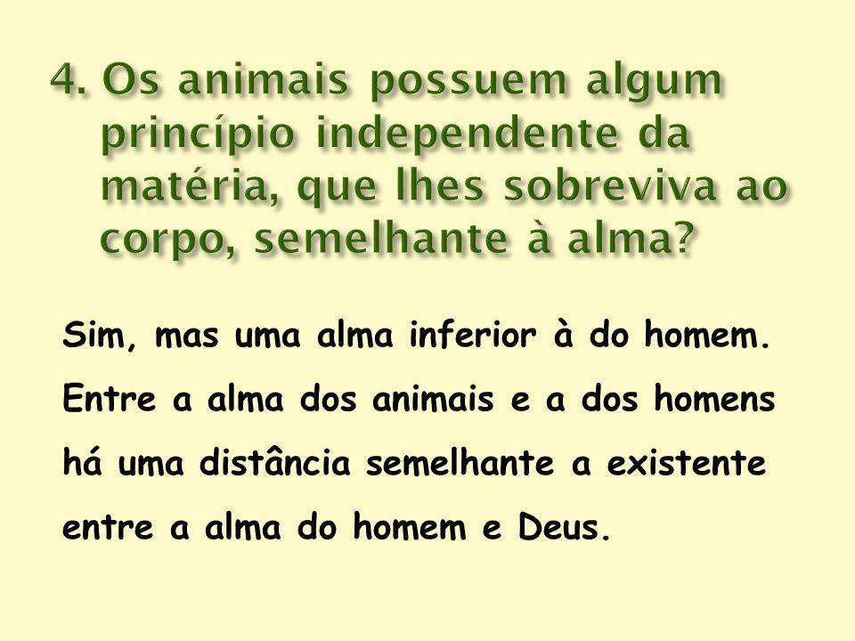 4. Os animais possuem algum princípio independente da matéria, que lhes sobreviva ao corpo, semelhante à alma