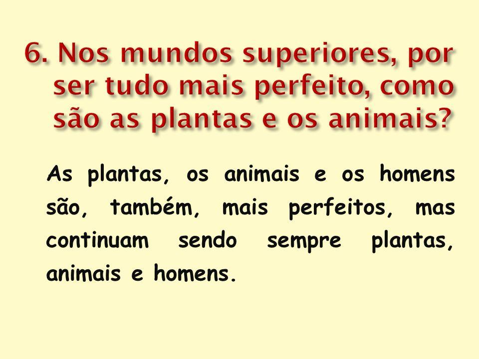 6. Nos mundos superiores, por ser tudo mais perfeito, como são as plantas e os animais