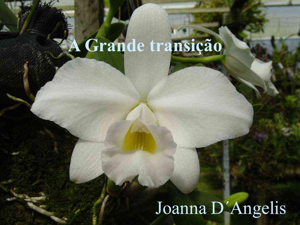 A Grande transição Joanna D´Angelis
