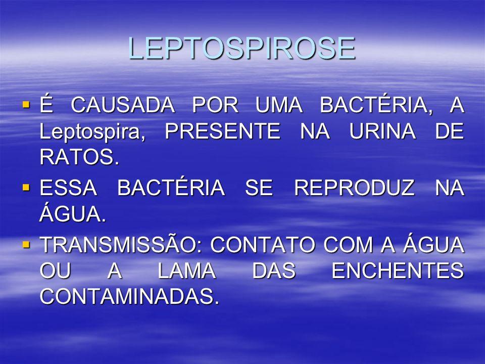 LEPTOSPIROSE É CAUSADA POR UMA BACTÉRIA, A Leptospira, PRESENTE NA URINA DE RATOS. ESSA BACTÉRIA SE REPRODUZ NA ÁGUA.
