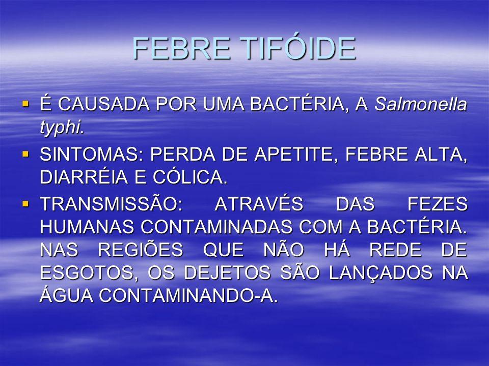 FEBRE TIFÓIDE É CAUSADA POR UMA BACTÉRIA, A Salmonella typhi.