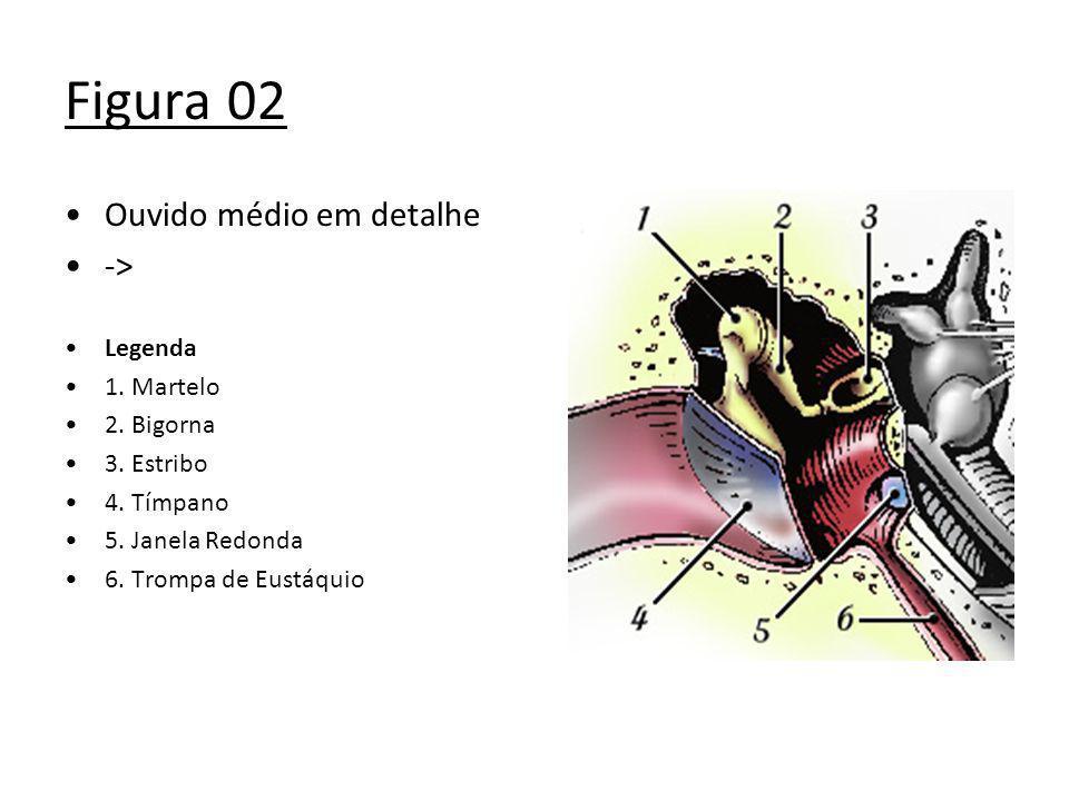 Figura 02 Ouvido médio em detalhe -> Legenda 1. Martelo 2. Bigorna