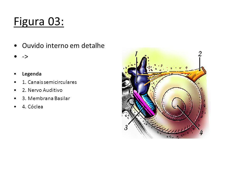 Figura 03: Ouvido interno em detalhe -> Legenda