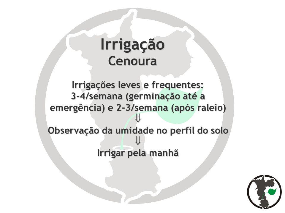 Irrigação Cenoura Irrigações leves e frequentes: