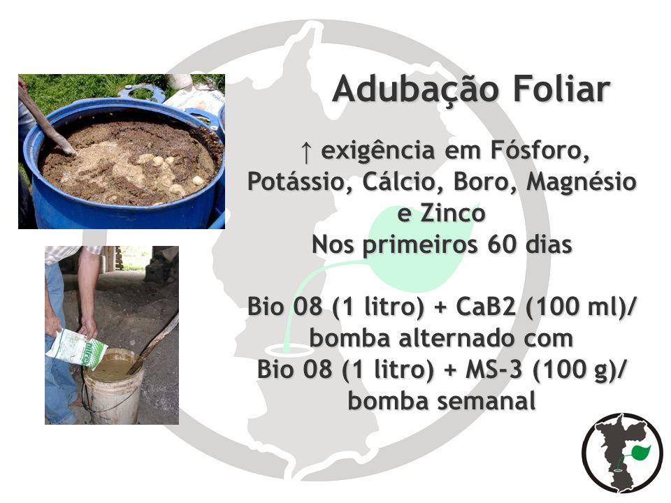Adubação Foliar↑ exigência em Fósforo, Potássio, Cálcio, Boro, Magnésio e Zinco. Nos primeiros 60 dias.