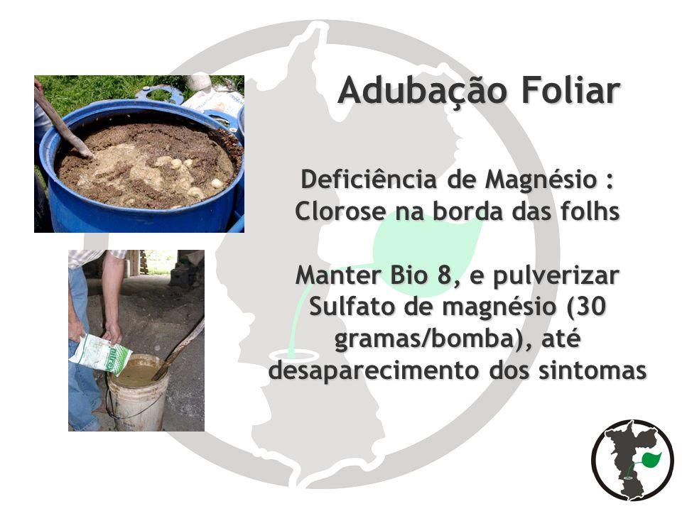 Deficiência de Magnésio : Clorose na borda das folhs