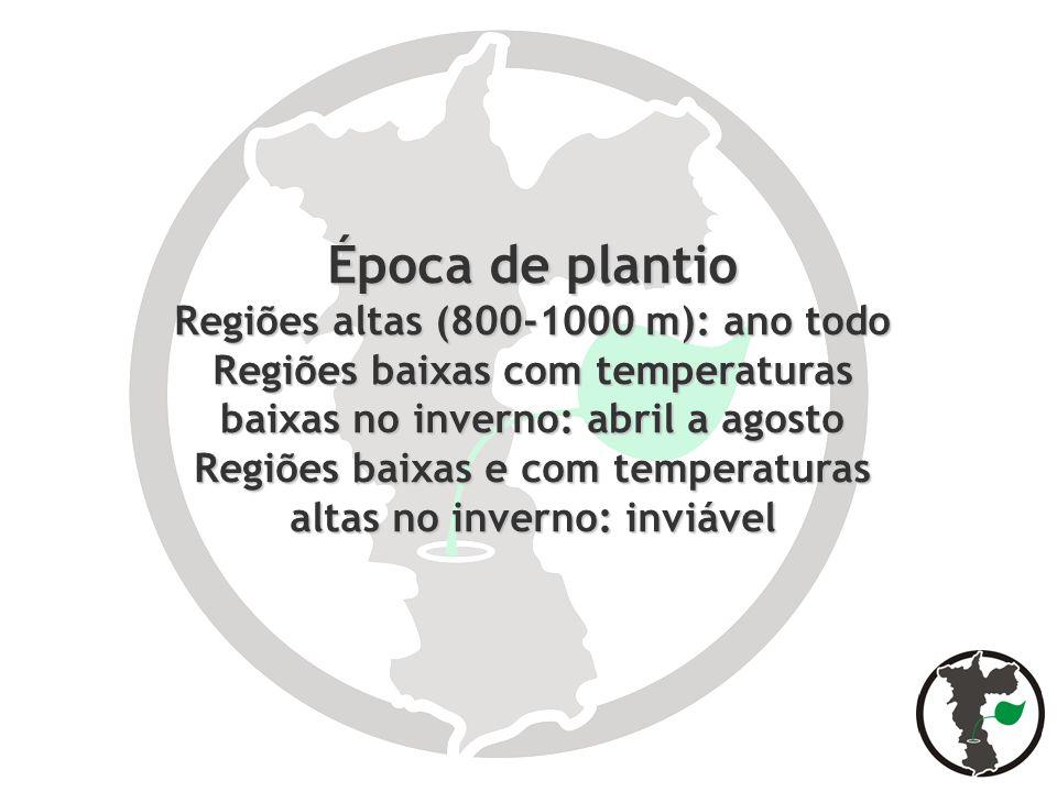 Época de plantio Regiões altas (800-1000 m): ano todo