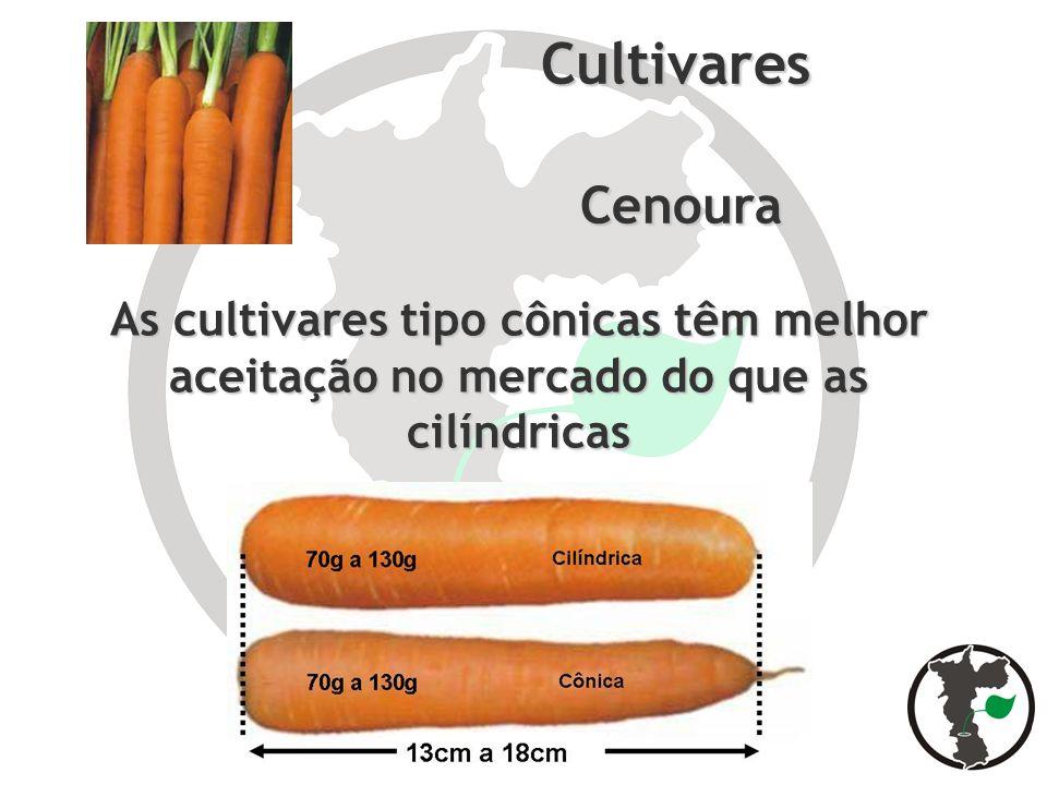Cultivares Cenoura As cultivares tipo cônicas têm melhor aceitação no mercado do que as cilíndricas