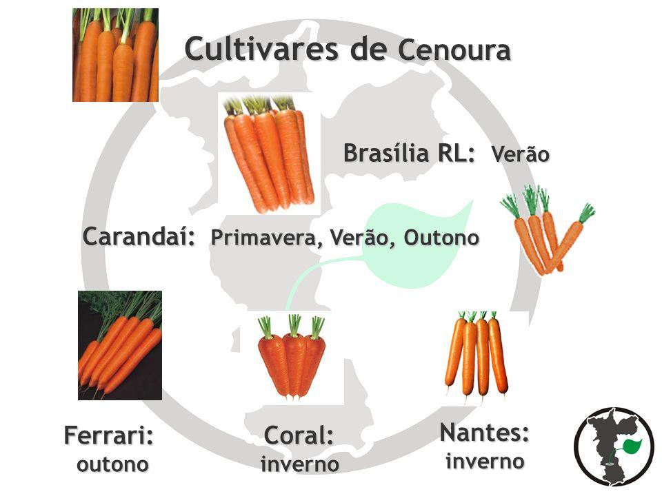 Cultivares de Cenoura Brasília RL: Verão