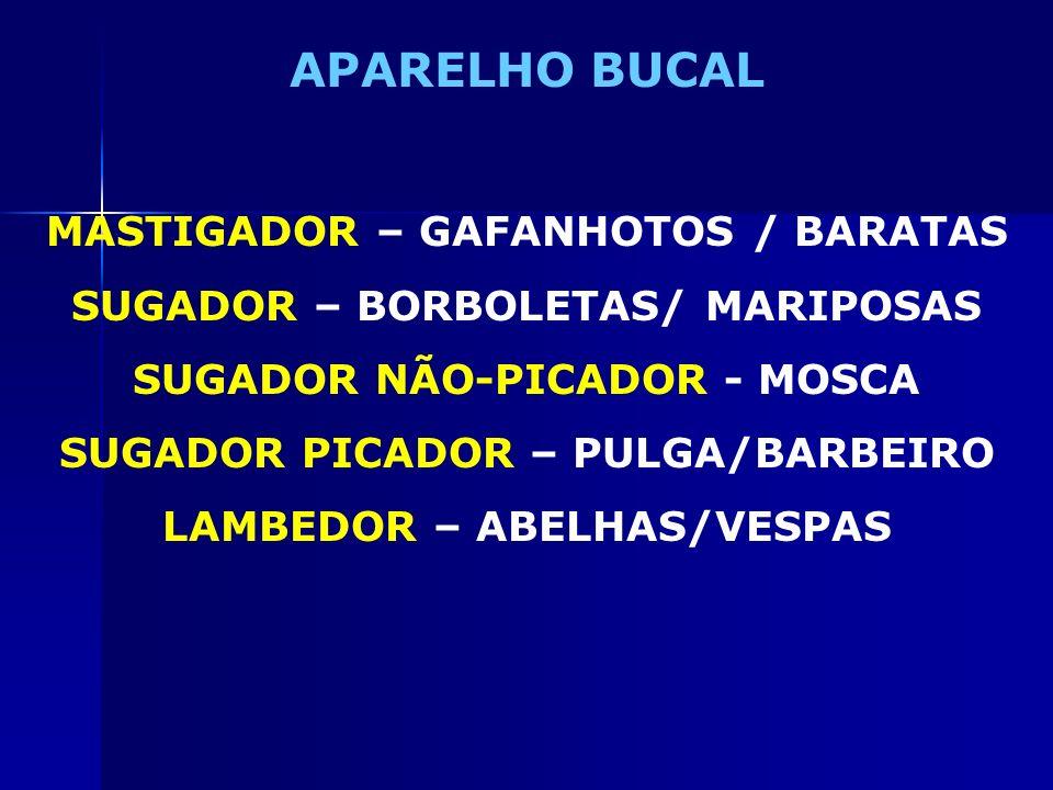 APARELHO BUCAL MASTIGADOR – GAFANHOTOS / BARATAS