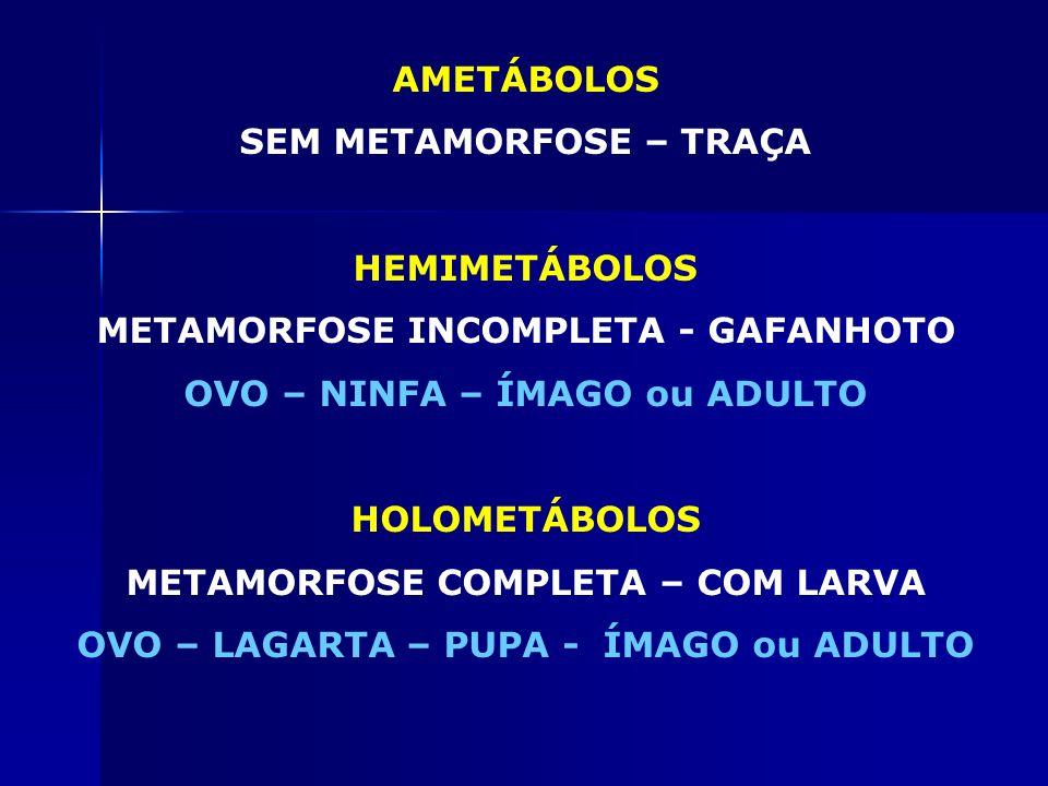 SEM METAMORFOSE – TRAÇA