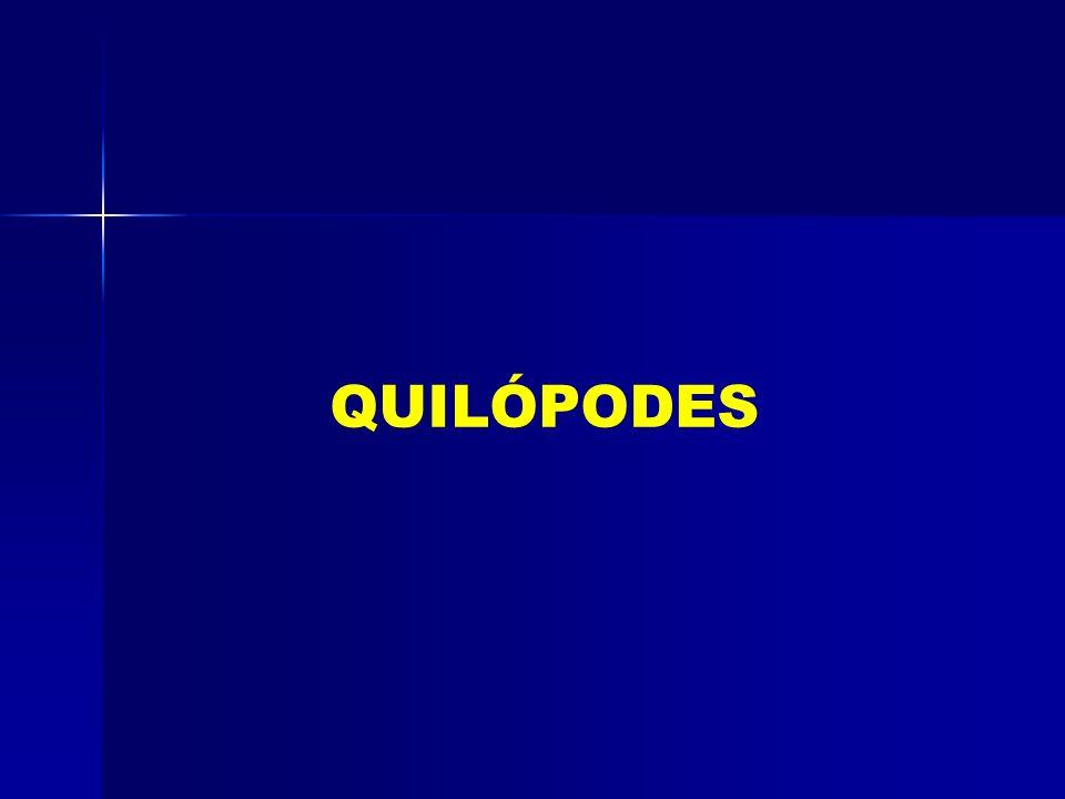 QUILÓPODES