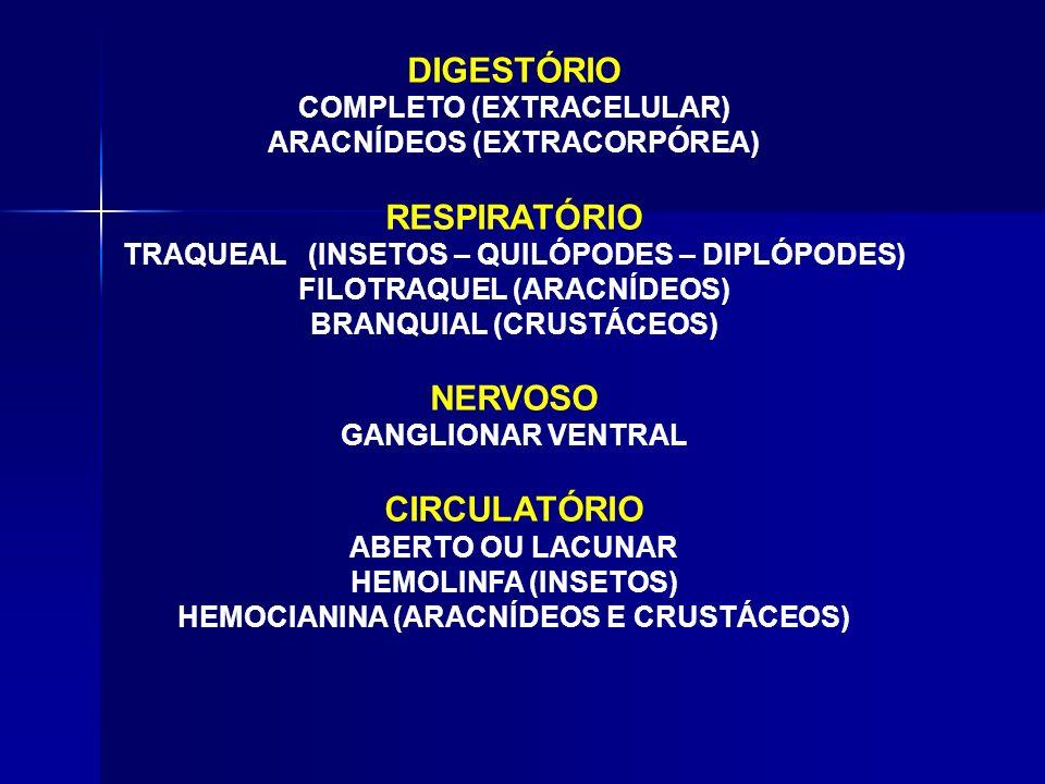 DIGESTÓRIO RESPIRATÓRIO NERVOSO CIRCULATÓRIO