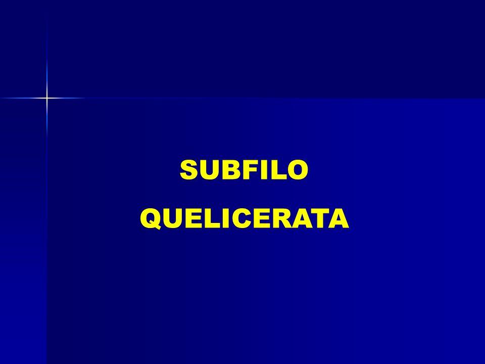 SUBFILO QUELICERATA