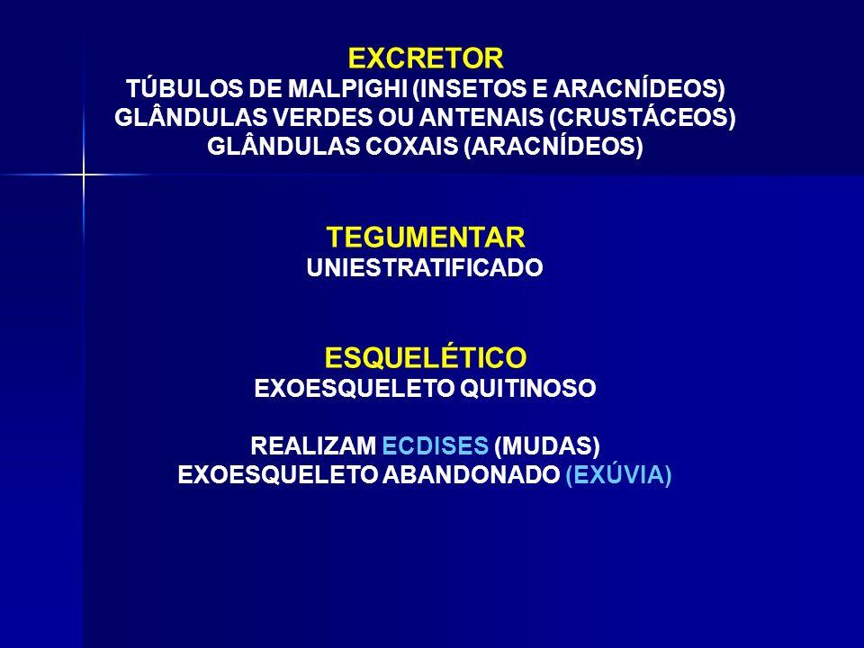 EXCRETOR TEGUMENTAR ESQUELÉTICO