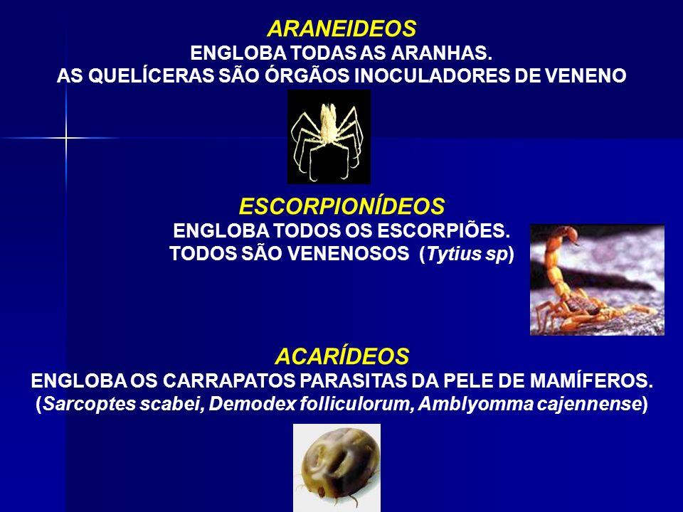ARANEIDEOS ESCORPIONÍDEOS ACARÍDEOS