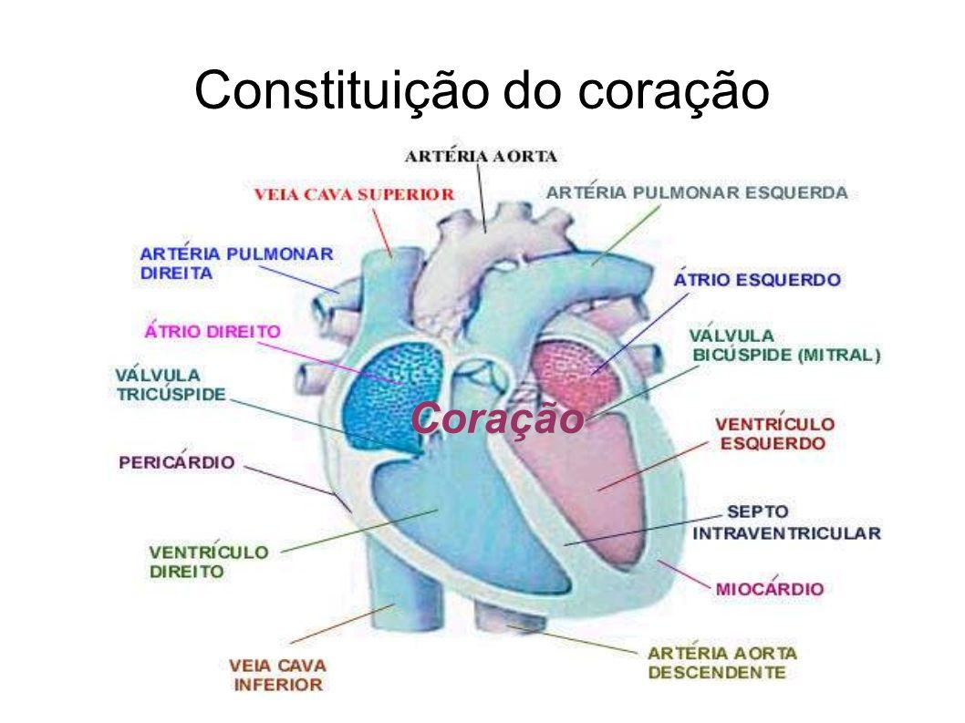 Constituição do coração