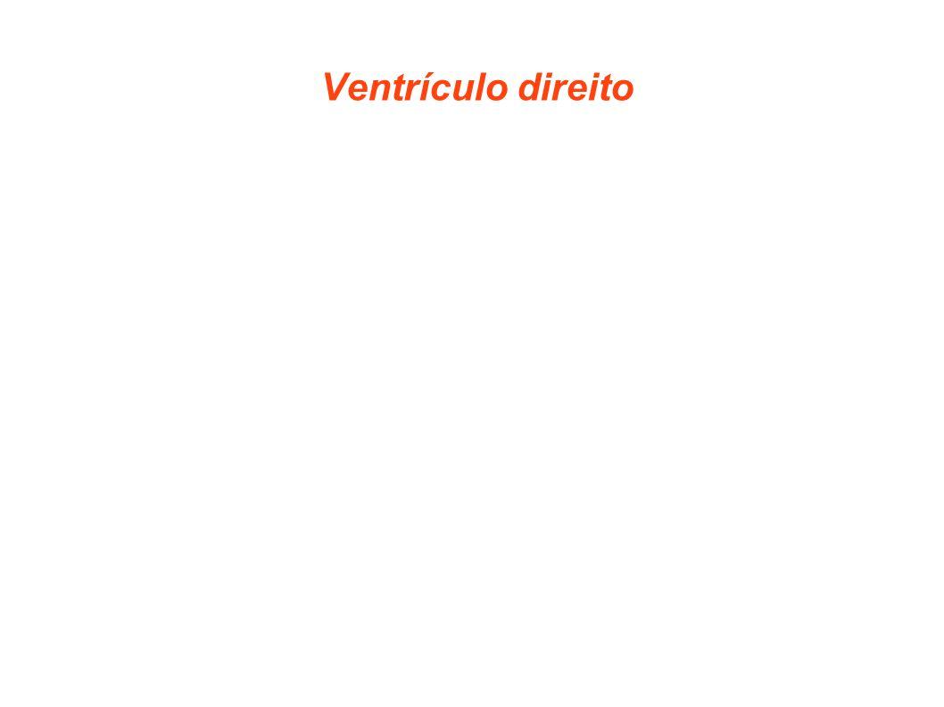Ventrículo direito