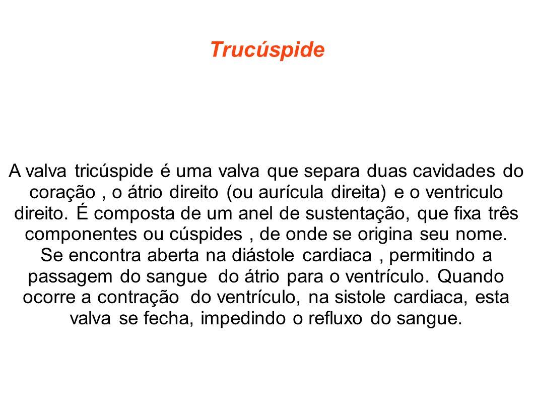 Trucúspide