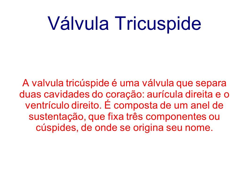 Válvula Tricuspide